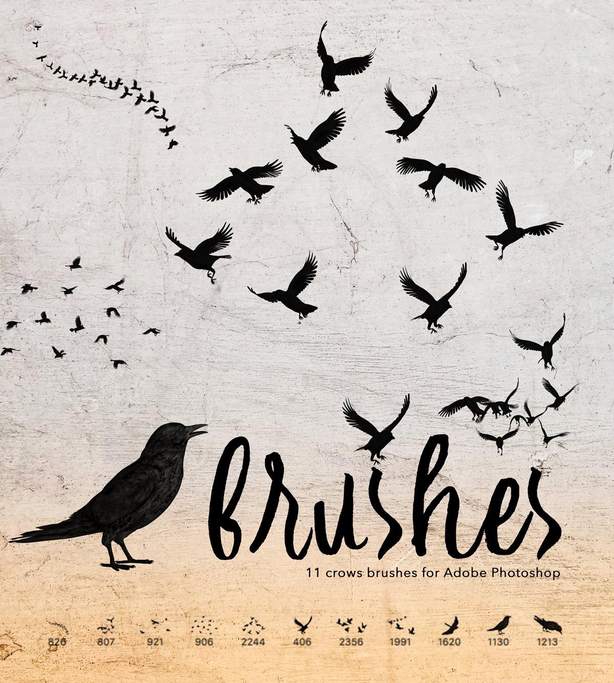 453ea525cd671 11 Crows Brushes - Photoshop brushes