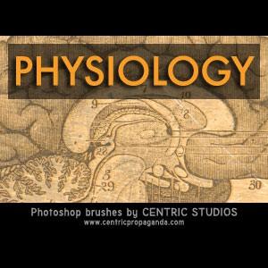 Photoshop brushes anatomy