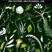 Foliage Sketches Brushes