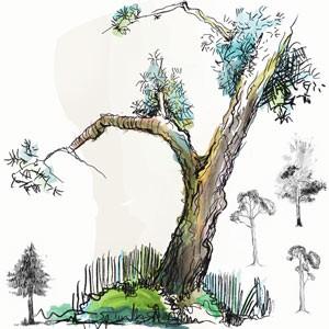 Photoshop brushes doodled tree