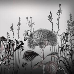 Photoshop brushes flowers, illustration, botany