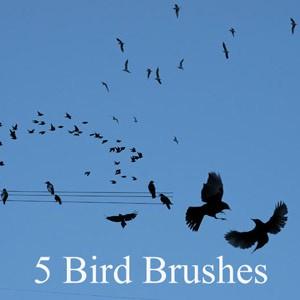 Photoshop brushes birds, silhouettes