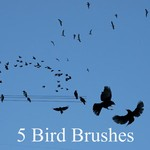 5 New Bird Brushes