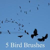 5 New Bird Brushes