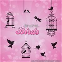 Birds Brushes