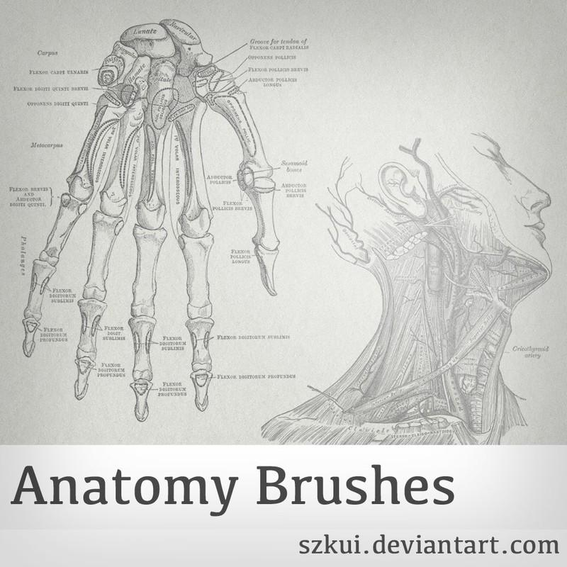 Photoshop brushes anatomy,skeleton,vintage