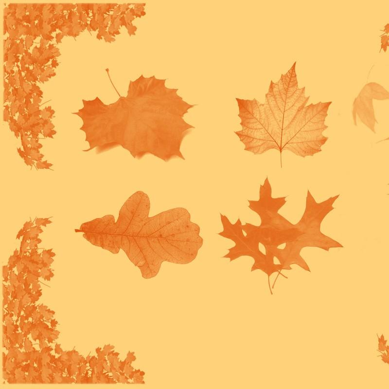 Photoshop brushes leaf, oak, maple