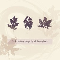 Oak, Beech and Maple Leaves PS Brushes