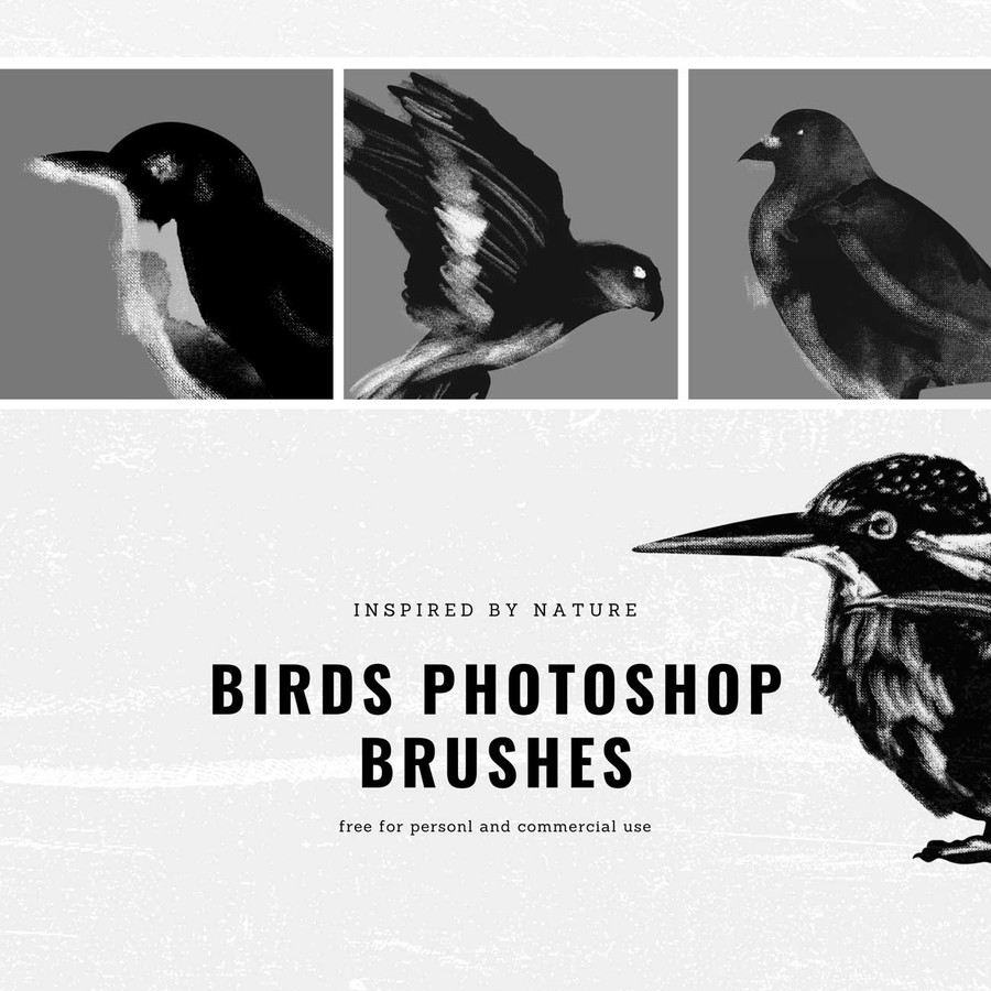Photoshop brushes birds, illustrations