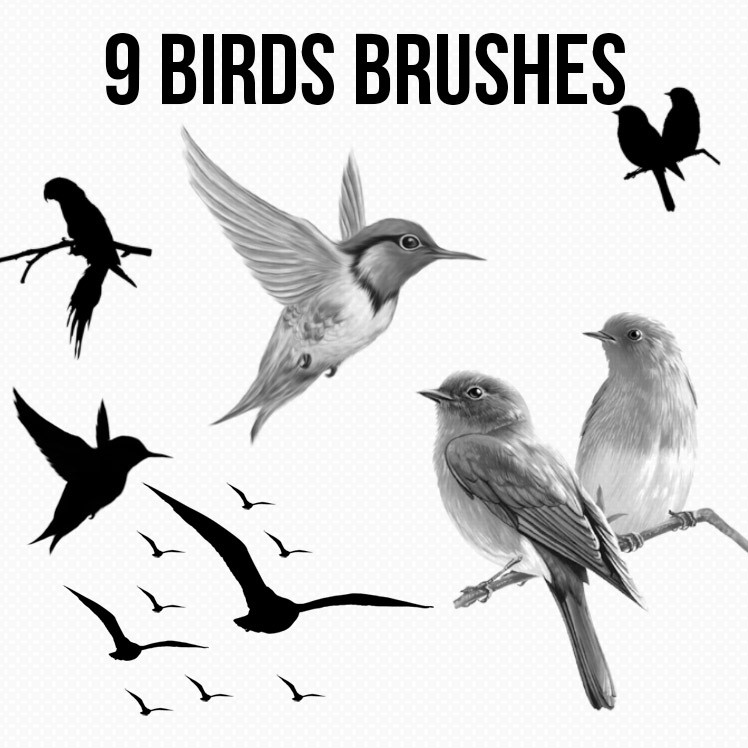 Photoshop brushes birds