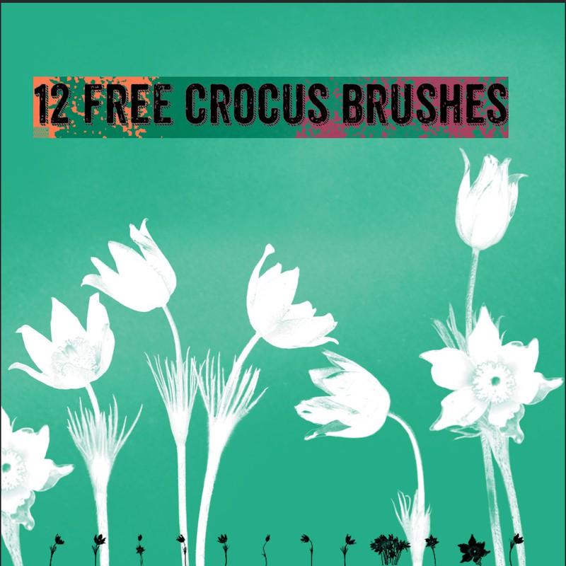 Photoshop brushes crocus, flowers