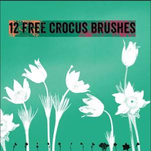 12 Free Crocus Brushes