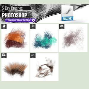 5 Dry Brushes