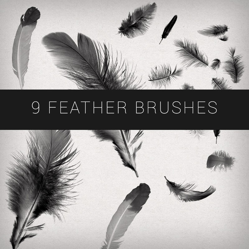 Photoshop brushes feathers
