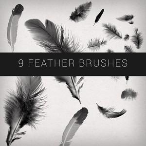 9 Feathers Brushes