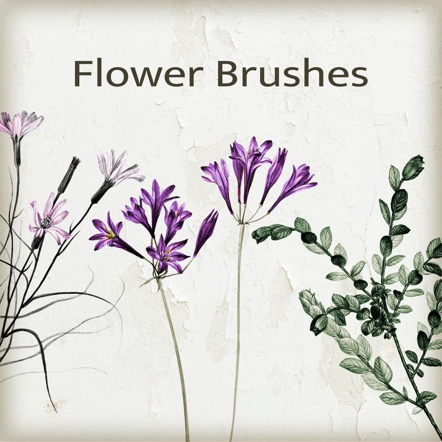 Photoshop brushes flowers, nature, plant
