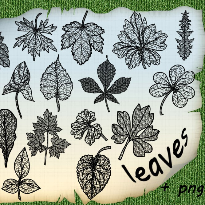 Photoshop brushes leaves