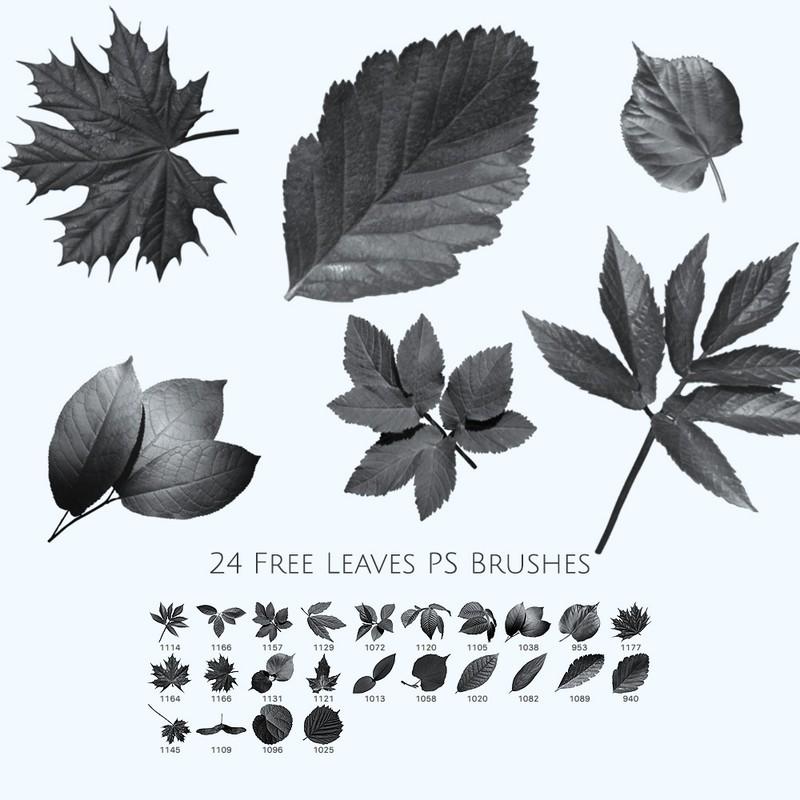 Photoshop brushes leaf, leaves