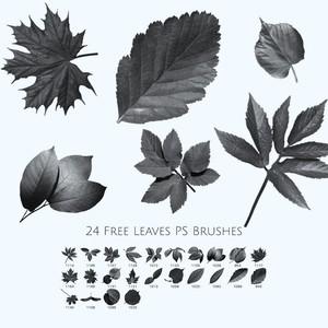 24 Free Leaves Photoshop Brushes