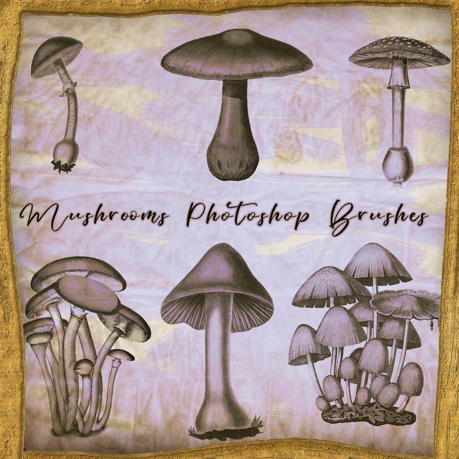 Photoshop brushes mushrooms