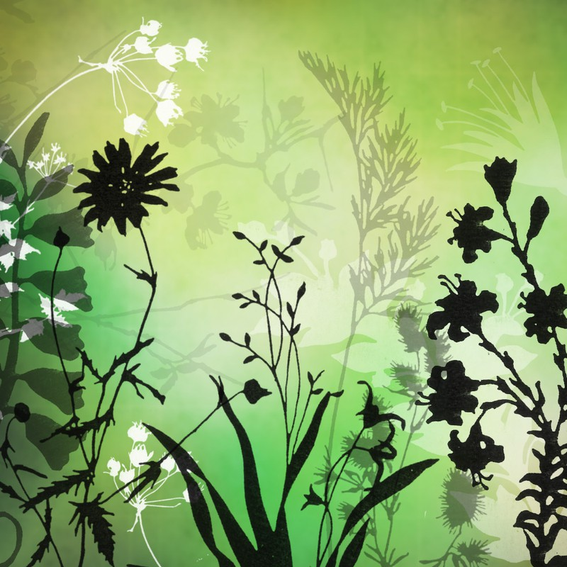 Photoshop brushes plants, silhouette