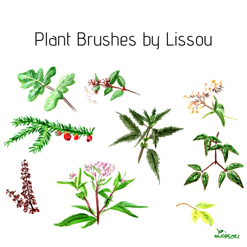 Photoshop brushes plants, watercolor