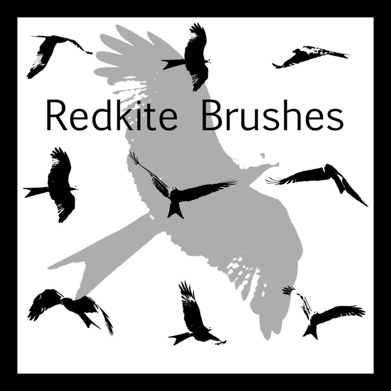 Photoshop brushes birds, silhouettes