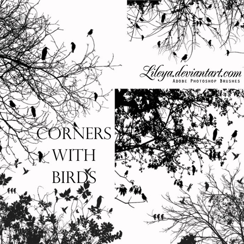 Photoshop brushes tree, birds, nature
