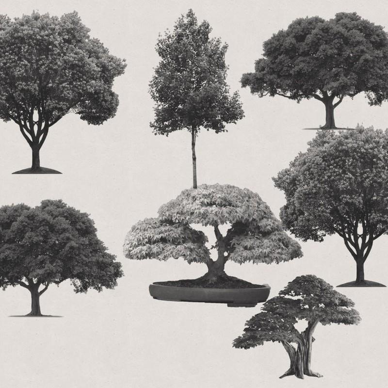 Photoshop brushes trees, set