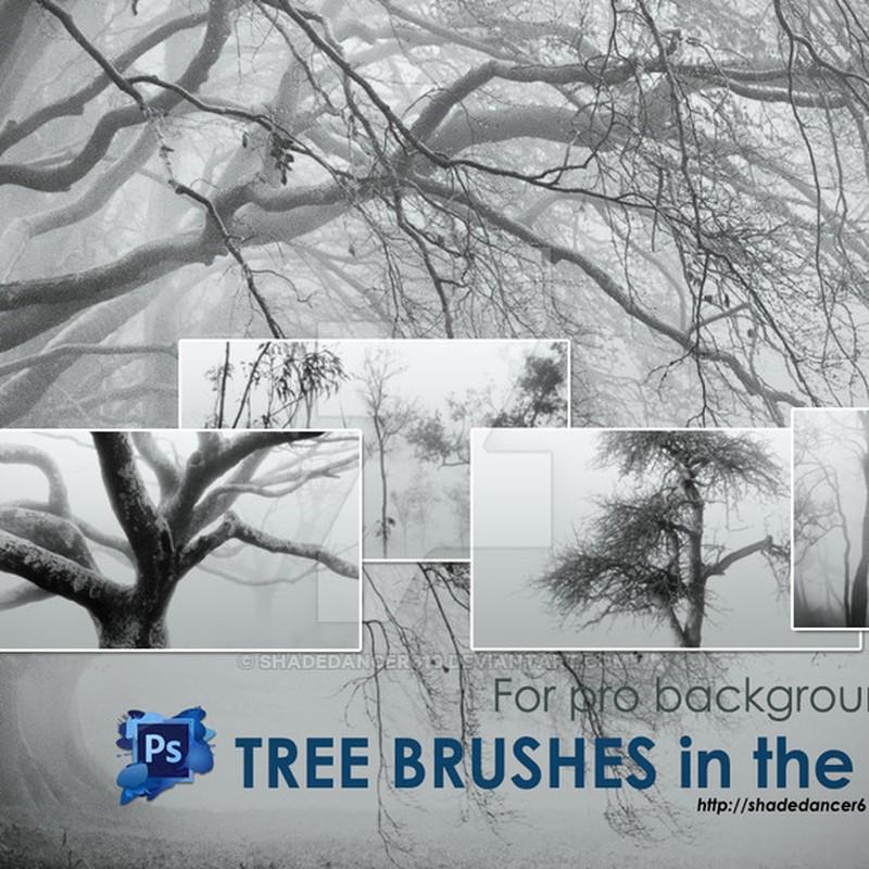 Photoshop brushes trees, nature, fog
