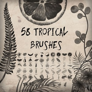 58 Tropical Brushes