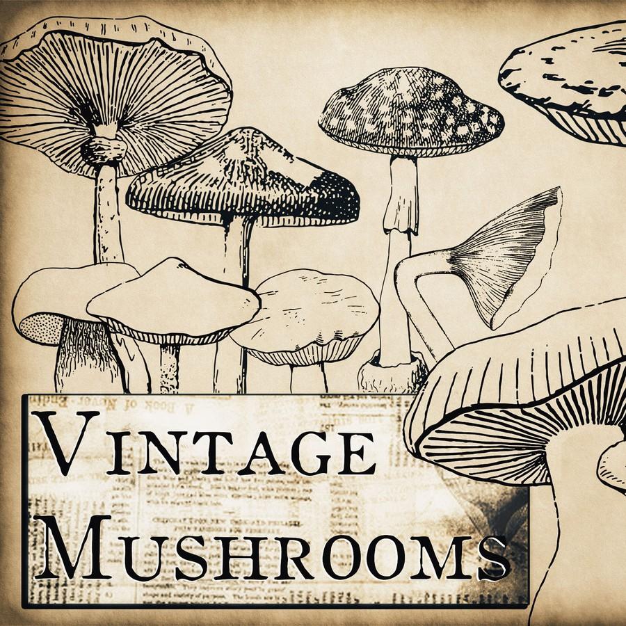 Photoshop brushes vintage, mushroom