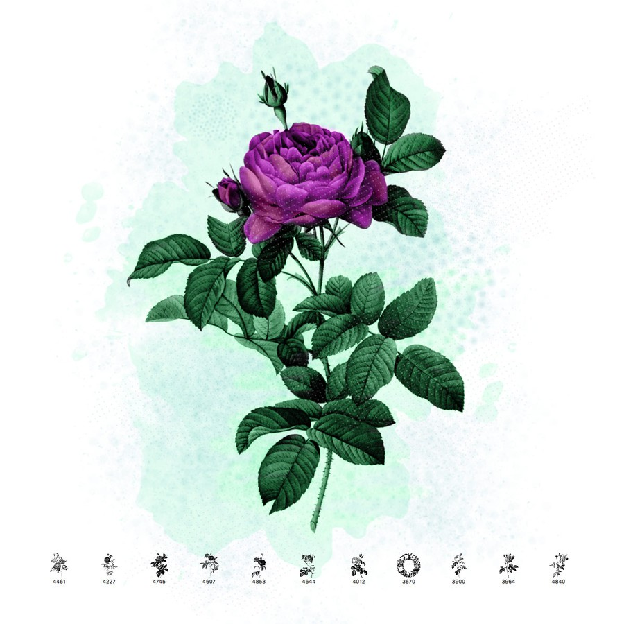 Photoshop brushes vintage, roses, illustration