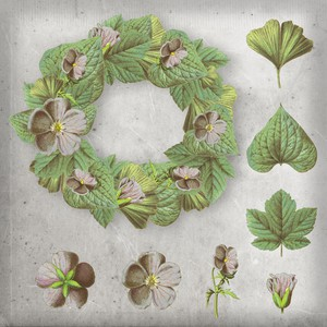 Free Flowers and Leaves PSD